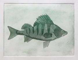 An aquatint print of a perch