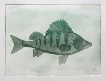 An aquatint print of a perch