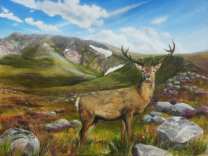Highland wildlife art Stag