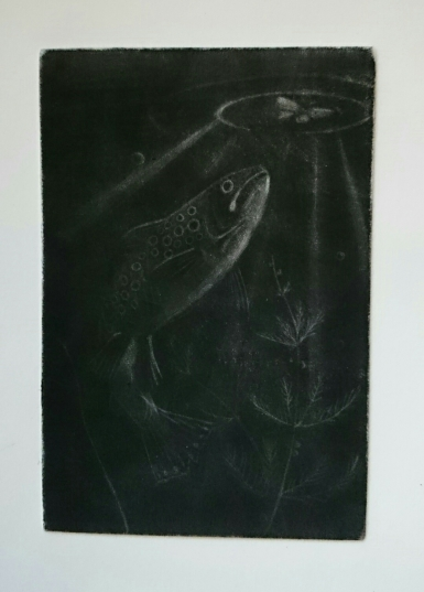 Print of a trout swimming towards a moth