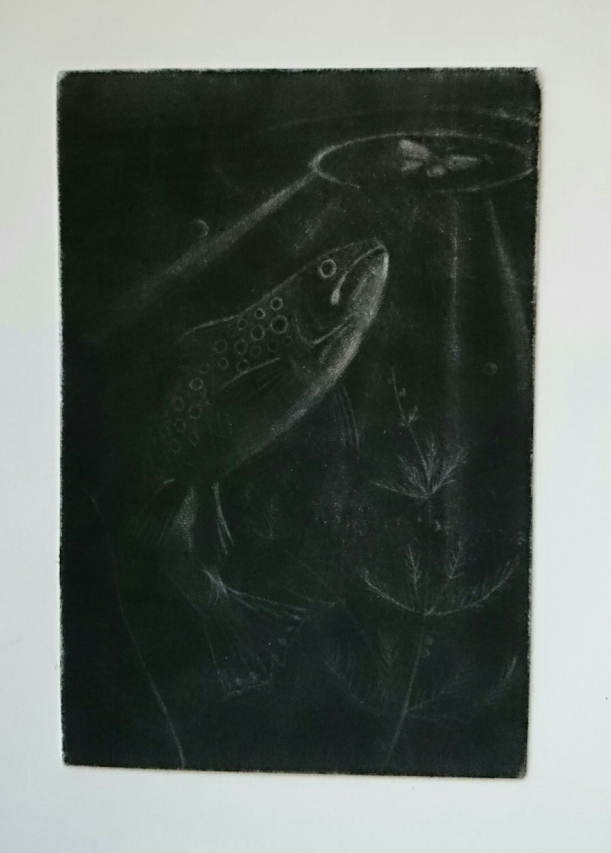 MezzotintpPrint of a trout swimming towards a moth