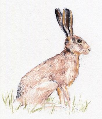 hare1
