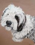 Brodie pet portrait