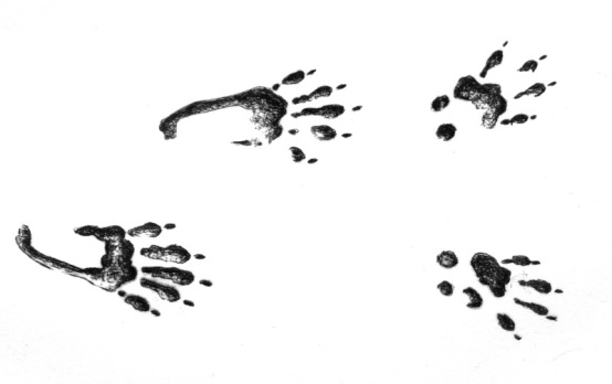 Squirrel tracks by Angus Grant