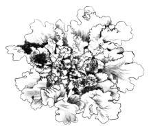 Lichen illustration by Angus Grant