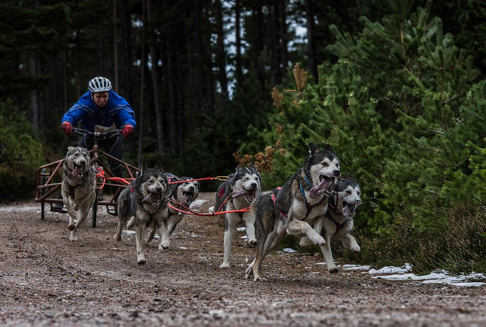Aviemore Sled Dog Rally. Photo courtesy of Steven Feasey. FB: @SFphotography75