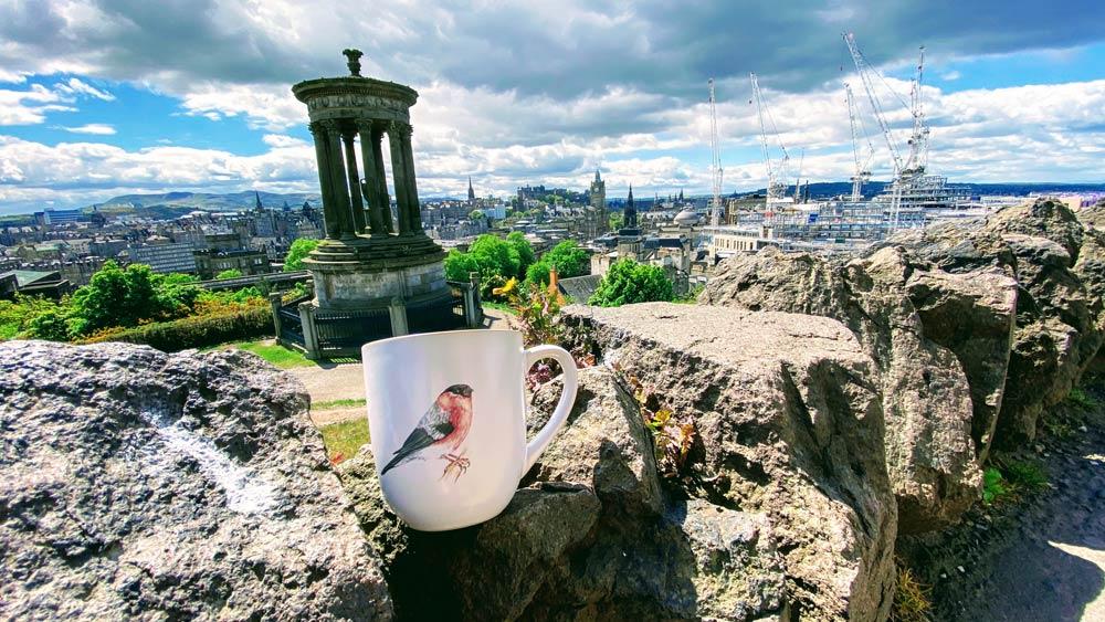 Bullfinch mug in Edinburgh by Mark McDermott