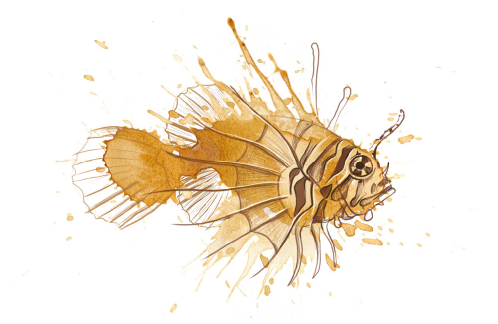 Lionfish by Angus Grant Art